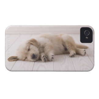 Golden Retriever iPhone 4 Cover