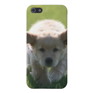 Golden Retriever iPhone case Cover For iPhone 5/5S