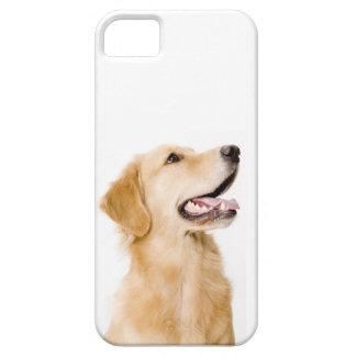 Golden Retriever iPhone Case iPhone 5 Cases