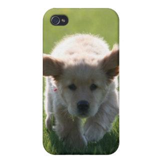 Golden Retriever iPhone case iPhone 4 Cover