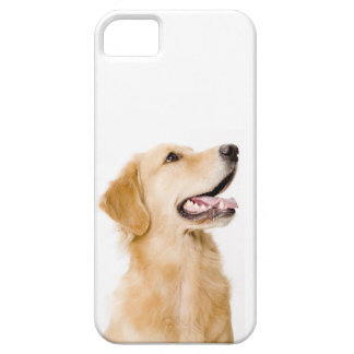 Golden Retriever iPhone Case iPhone 5 Covers