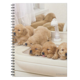 Golden Retriever; is a relatively modern and 2 Spiral Note Books