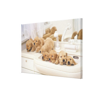 Golden Retriever; is a relatively modern and 3 Canvas Print