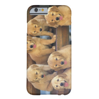 Golden Retriever; is a relatively modern and Barely There iPhone 6 Case