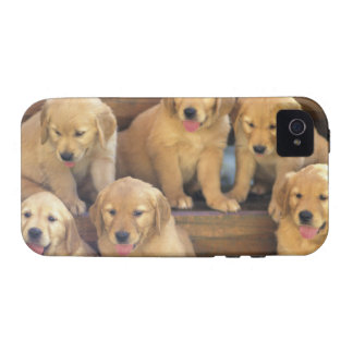 Golden Retriever; is a relatively modern and Case-Mate iPhone 4 Covers