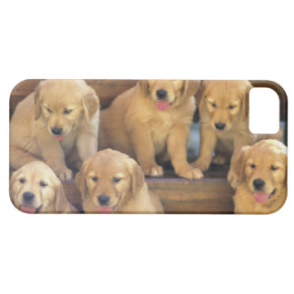 Golden Retriever; is a relatively modern and iPhone 5 Case