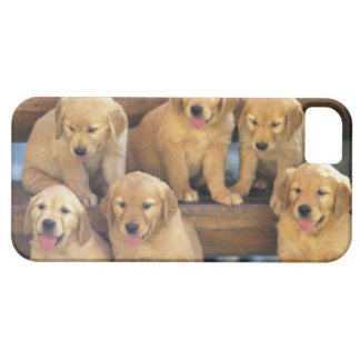 Golden Retriever; is a relatively modern and iPhone 5 Cases