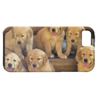 Golden Retriever; is a relatively modern and iPhone 5 Cover