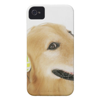 Golden retriever listening to music iPhone 4 cases