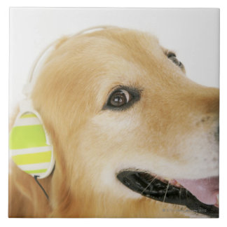 Golden retriever listening to music tile