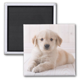 Golden Retriever Lying Down Magnet