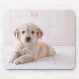 Golden Retriever Lying Down Mouse Pad