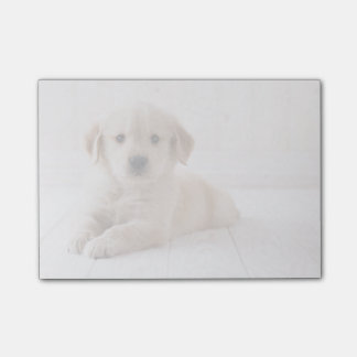 Golden Retriever Lying Down Post-it Notes