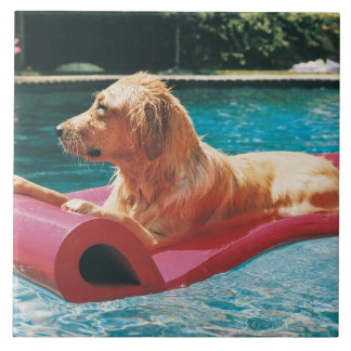 Golden Retriever Lying on an Air Bed in a Tile