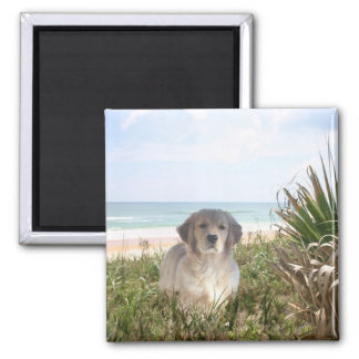 Golden Retriever Magnet Purfect Puppy