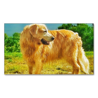Golden Retriever Magnetic Business Cards