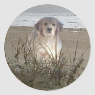 Golden Retriever On The Beach Sticker