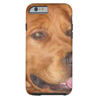 Golden Retriever Phone Case Tough iPhone 6 Case