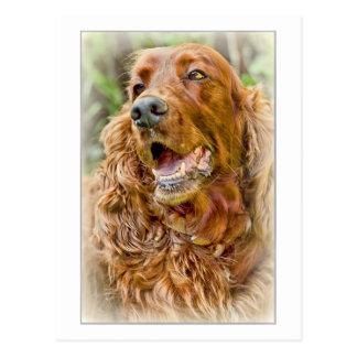 Golden Retriever portrait Postcard