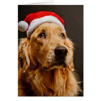 Golden Retriever posing for his Christmas Greeting Card