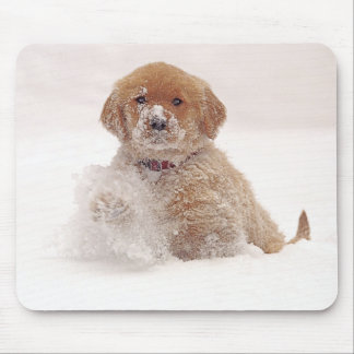 Golden Retriever Pup in Snow Mouse Pad