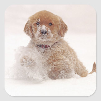 Golden Retriever Pup in Snow Square Sticker