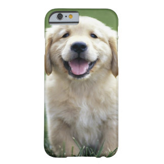 Golden Retriever Pup iPhone 6 case Barely There iPhone 6 Case