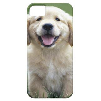 Golden Retriever Pup iPhone Case iPhone 5 Cases