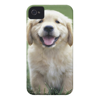 Golden Retriever Pup iPhone Case Case-Mate iPhone 4 Cases