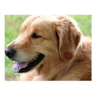 Golden Retriever Pup Postcard