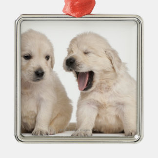 Golden Retriever puppies (4 weeks old) Christmas Ornament