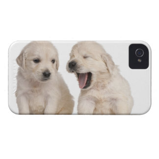 Golden Retriever puppies (4 weeks old) iPhone 4 Case-Mate Case