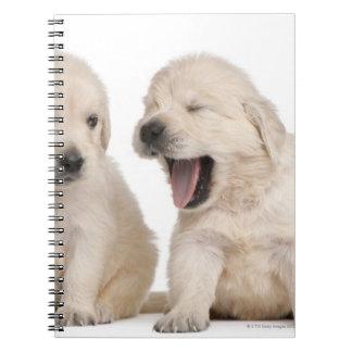 Golden Retriever puppies (4 weeks old) Spiral Notebook