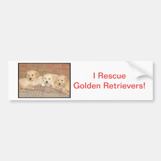Golden Retriever Puppies Bumper Sticker