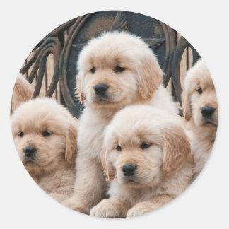 Golden Retriever Puppies Classic Round Sticker
