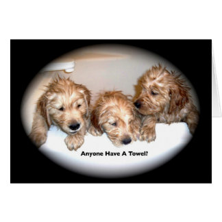 Golden Retriever Puppies in the Tub Greeting Card