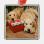 Golden retriever puppies with christmas gift christmas ornaments