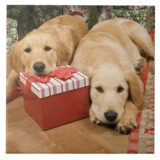 Golden retriever puppies with christmas gift large square tile