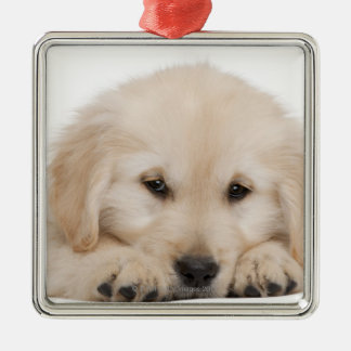 Golden retriever puppy (20 weeks old) christmas ornament