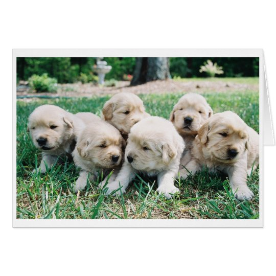Golden Retriever Puppy 6 Pack Card