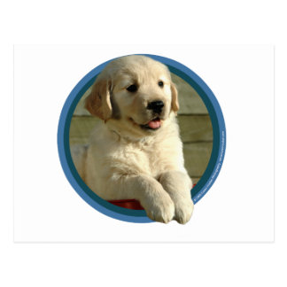 Golden Retriever Puppy Art Postcard