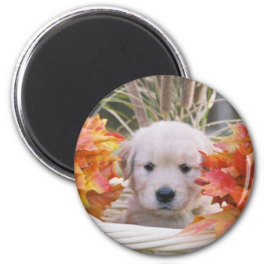Golden Retriever Puppy Autumn Scene 6 Cm Round Magnet