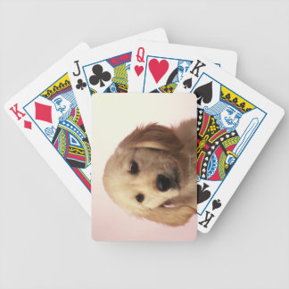 Golden retriever puppy bicycle playing cards