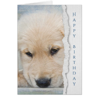 golden retriever puppy birthday greeting card