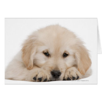 Golden retriever puppy card