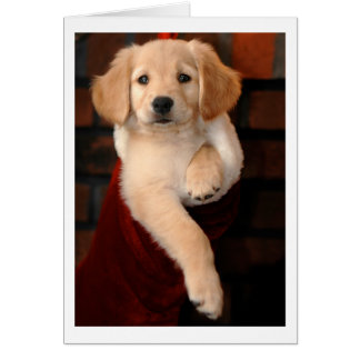 Golden Retriever Puppy Christmas Stocking Card