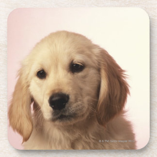 Golden retriever puppy coaster