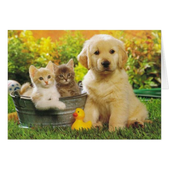 Golden Retriever Puppy Dog And Kittens Blank Card