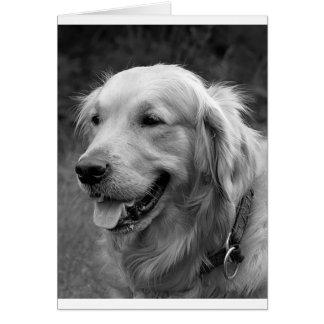 Golden Retriever Puppy Dog  Blank Card