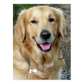 Golden Retriever Puppy Dog Blank Postcard